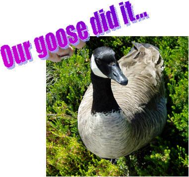 Photo 16 Goose proud