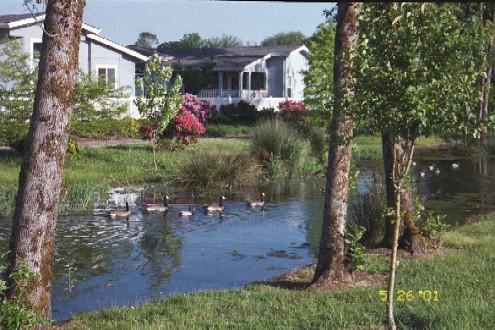 Photo 22 ducks on water 3
