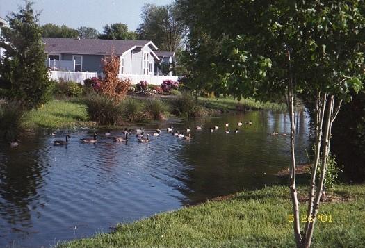 Photo 5 ducks on water